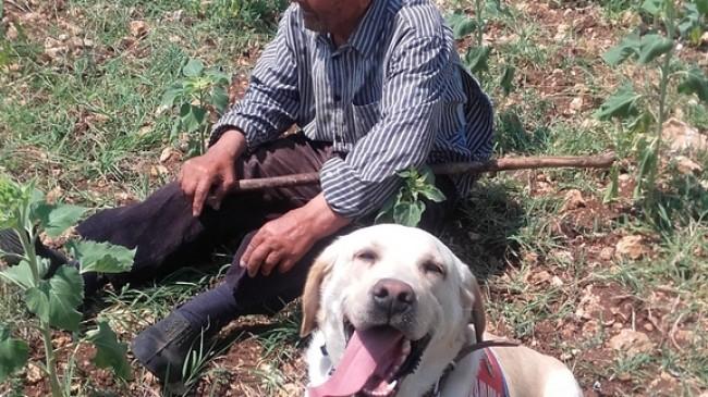 Kayıp şahsı iz takip köpeği buldu