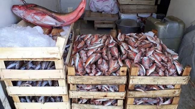 İğneada'da Balık Çeşitleri Bollaşmaya Başladı