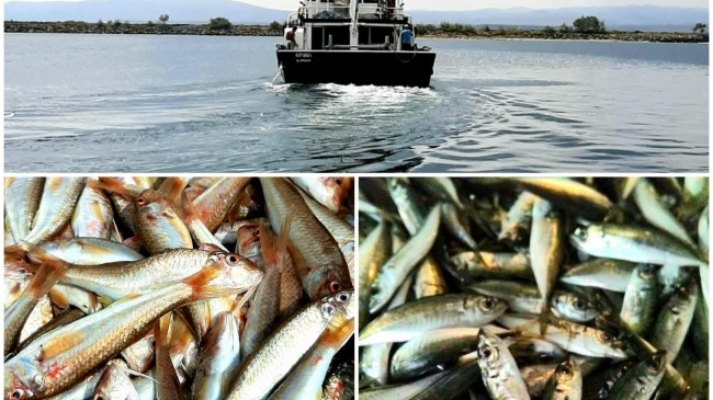Balık yasağının bitmesi ile bitlikte  balıkçılar denize açıldı