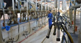Süt destekleri ödenmeye başladı