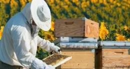 Arıcılara yönelik erken ilkbahar bakımı
