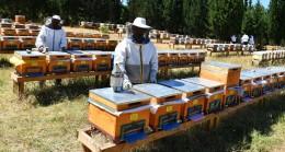 """Arıcılığın en önemli sorunlarından """"Varroa (arı akarı)"""""""