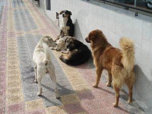 otavalo-street-dogs-otavalo